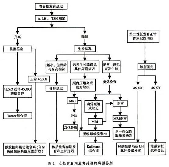 电路 电路图 电子 设计 素材 原理图 554_546